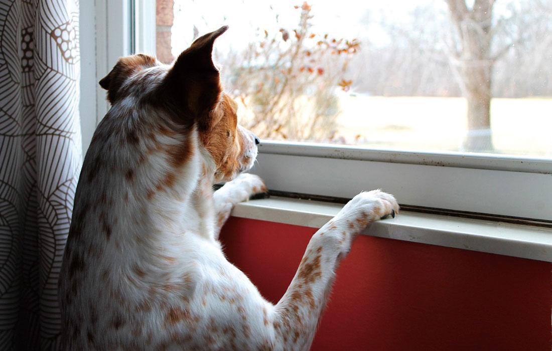 犬の分離不安
