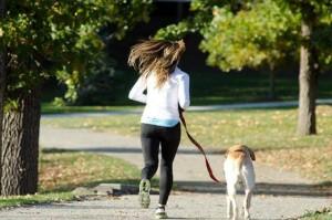散歩をリードする