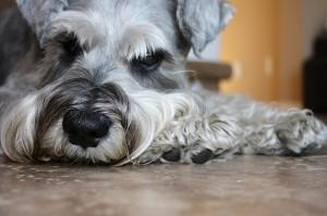 犬がため息をつく理由