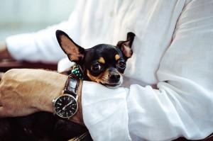 抱っこをしてため息をする犬