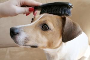犬のブラッシングの効果