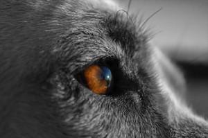 犬の角膜炎の治療