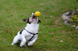 犬のストレス解消法