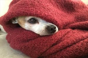 犬が玉ねぎを食べたときの対処法