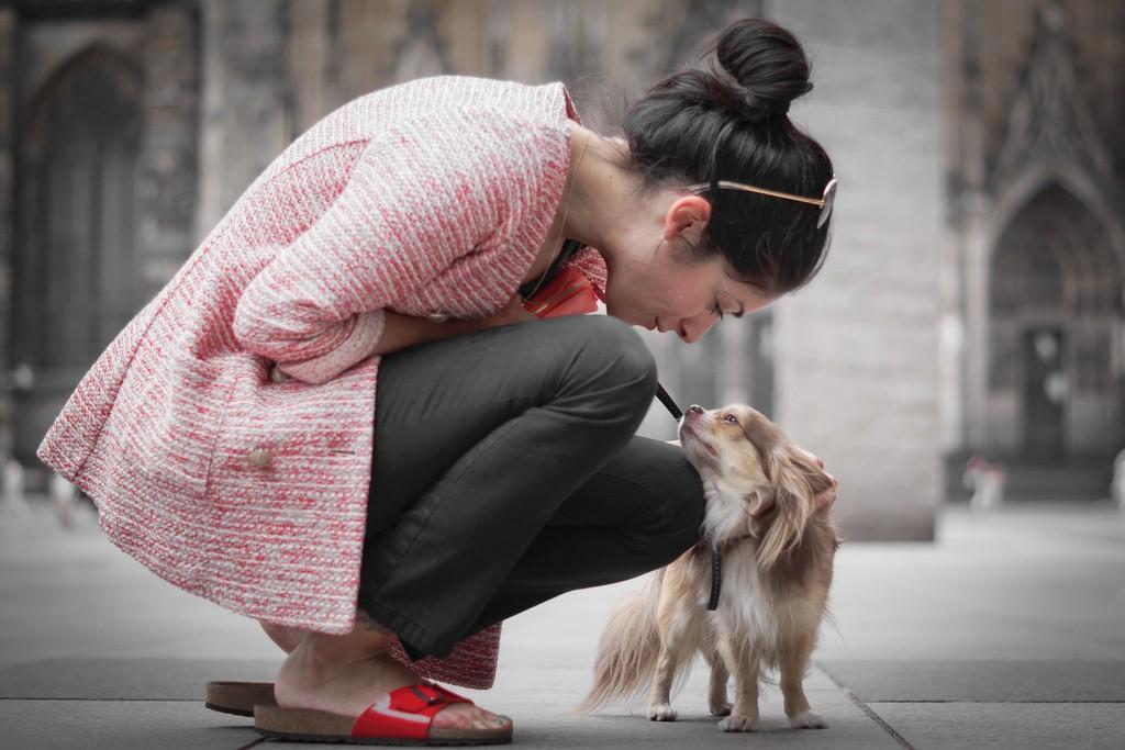 愛犬の健康に漢方