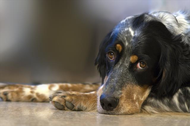 「犬 寝ない」の画像検索結果